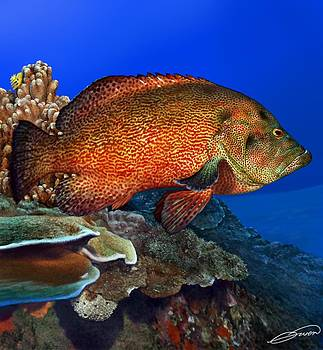 Tomato Grouper by Owen Bell