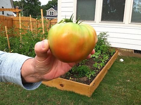 Tomato harvest by Amy Rosenberg