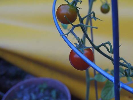 Anastasia Konn - Tomatoes