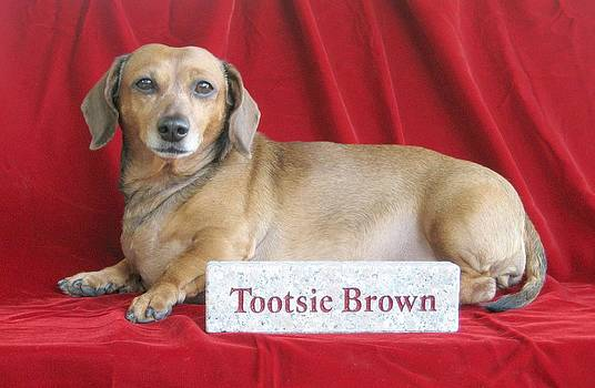 Tootsie the Star by Greg Reed Brown