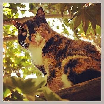 #torkeweekend #nc #cat by John Baccile