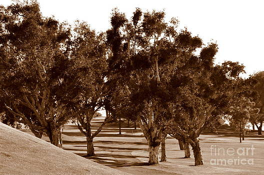 Torrey Pines Afternoon  4 by Tanya  Searcy