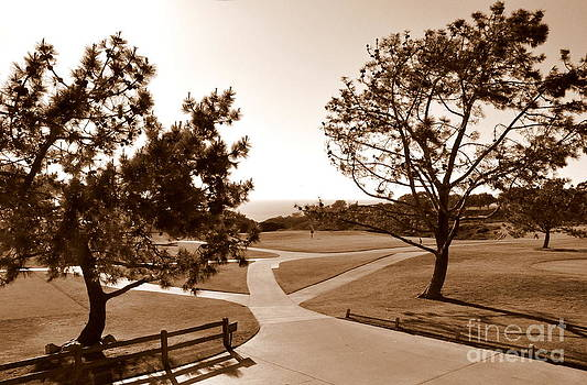Torrey Pines Afternoon by Tanya  Searcy
