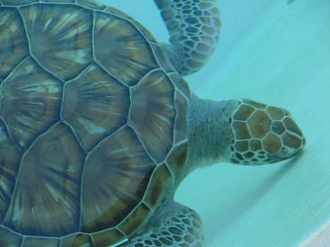 Tortoise by Michael Kovacs
