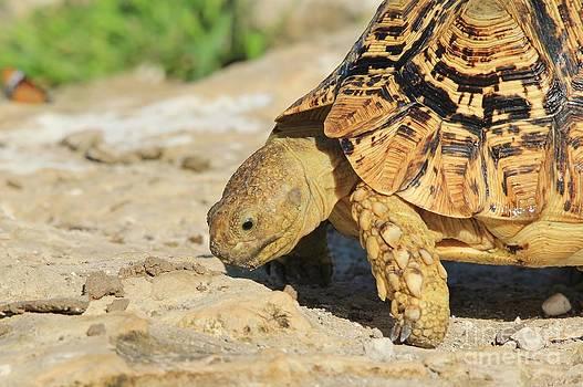 Hermanus A Alberts - Tortoise Pose