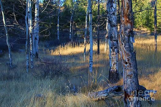 Roland Stanke - Totem Trees