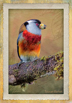 Toucan Barbet by Ecuador Images
