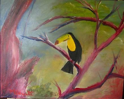 Toucan in wild by M Bhatt