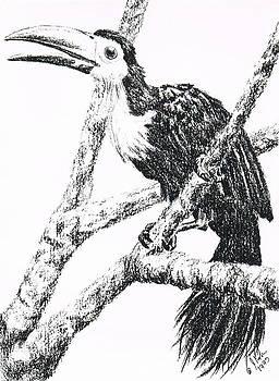 Toucan by Joann Renner