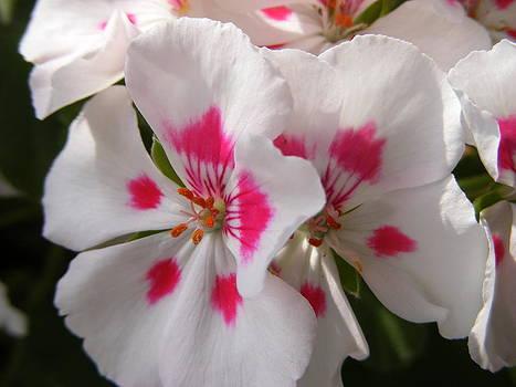 Melissa Lightner - Touch of Pink