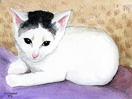 Toupee kitten by Christine Winship