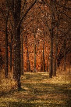 Scott Bean - Nature