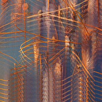 Towards divine wisdom by Anders Hingel