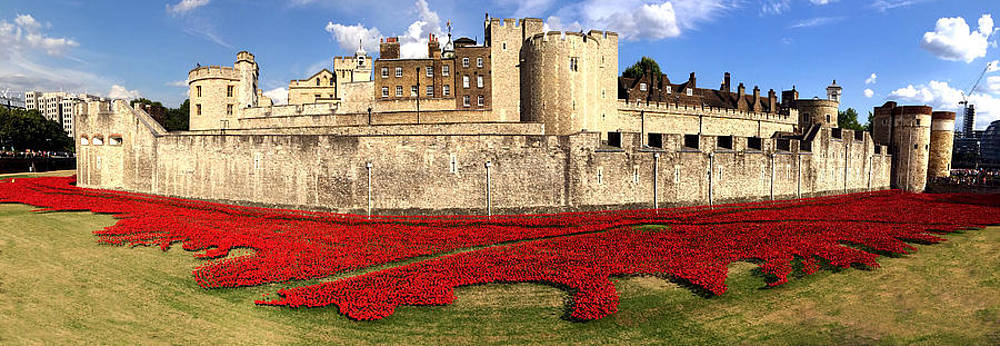 Tower of London Poppies  by James  Wasdell