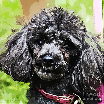 Nancy Stein - Toy Poodle