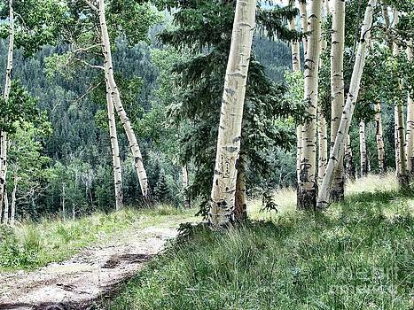 Track Through High Country Aspen by Dana Carroll