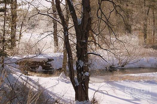 Tracks and Shadows Left By Nature In The Snowy New England Landscape by Eunice Miller
