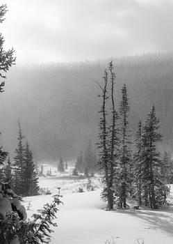 Tracks in Snow by Garett Gabriel