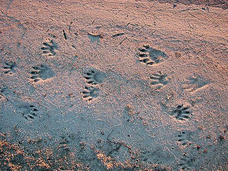 Tracks in the Sand by Bob Richter
