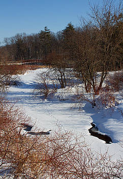 Barbara McMahon - Tracks through the Dogwood Creek