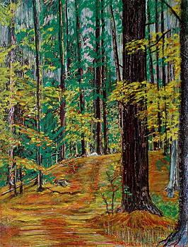 Trail At Wason Pond by Sean Connolly