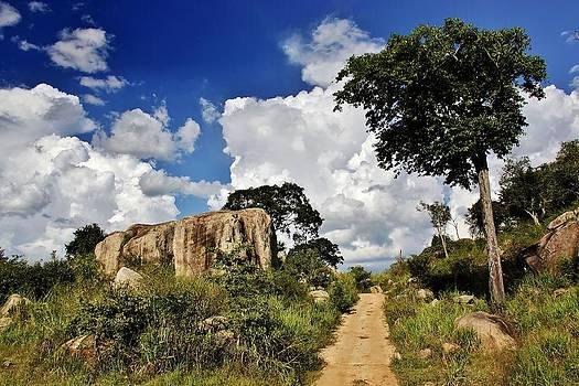 Jose Carlos Fernandes De Andrade - Trail