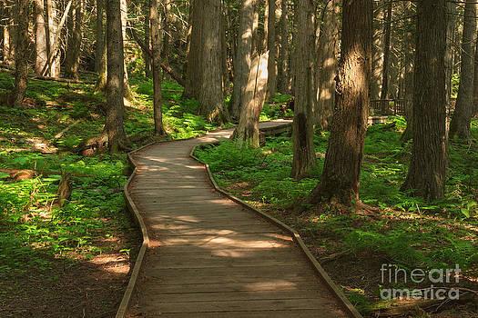 Charles Kozierok - Trail of the Cedars