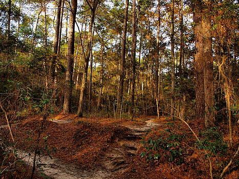 Trail Steps - Vereen Gardens by Kathleen Palermo