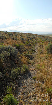 Trail West by Cindy Bettinger