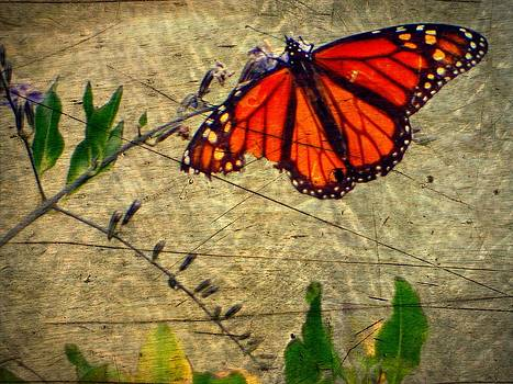 Tranquil Butterfly by Kevin Moore