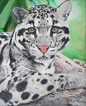 Tranquil Leopard Oil Painting on Canvas 8 x 10 inches by Pigatopia by Shannon Ivins