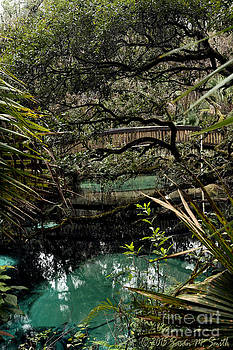 Tranquil Springs by Susan Smith