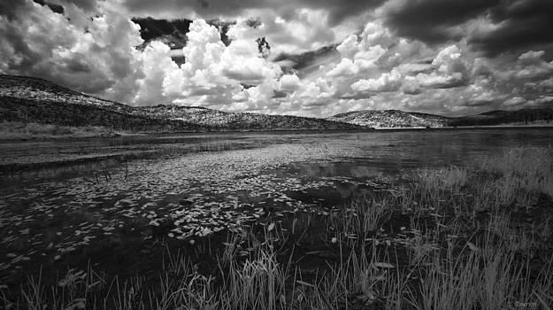 Tranquil by Yvonne Emerson AKA RavenSoul