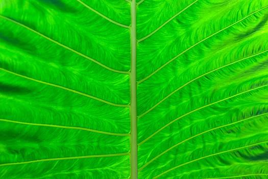 Charles Lupica - transparent fern