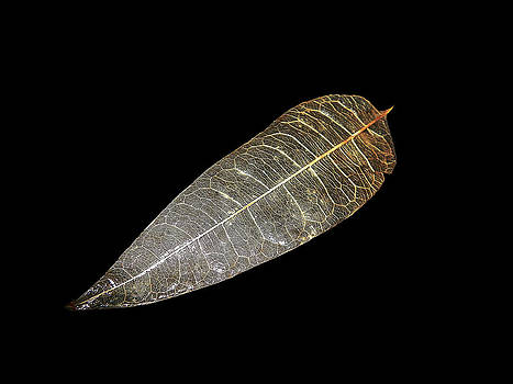 Sannel Larson - Transparent Leaf