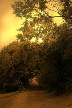 Nina Fosdick - Traveling under the trees