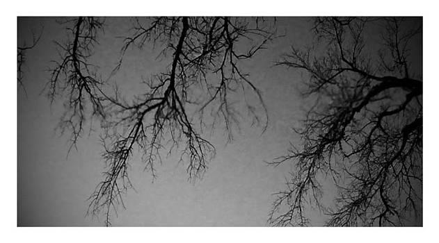 Tree 1 by Dustin Soph
