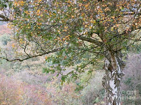 Tree 3 by Bernice Grundy