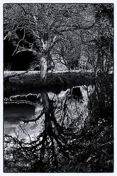 Tree Above Below by David Durham