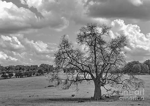 Wayne Nielsen - Tree Alone in Field - Tree of Many Seasons
