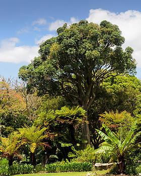 Tree and ferns by Paul Indigo