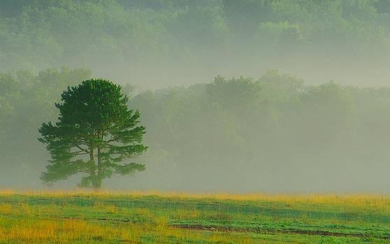 Tree and Fog by Ben  Keys Jr
