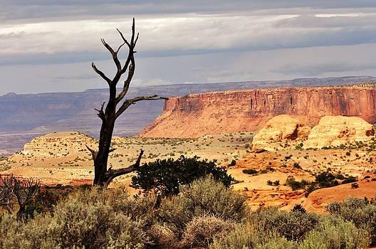 Marty Koch - Tree and Mesa