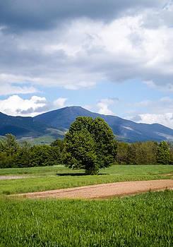 Eliza Donovan - Tree and Mountain