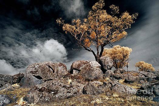Russ Brown - Tree and Rocks