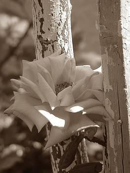 Tree and Rose by Angela Zafiris