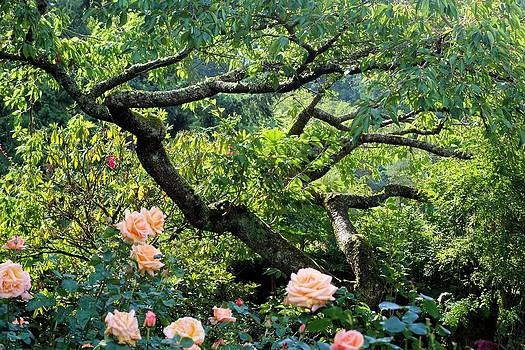 Tree and Roses by Jane Girardot
