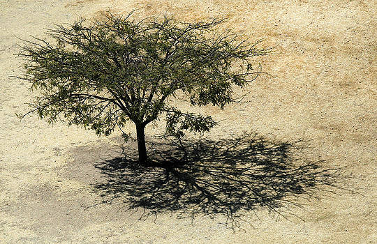 Tree and Shadow at Monte Alban by Rob Huntley