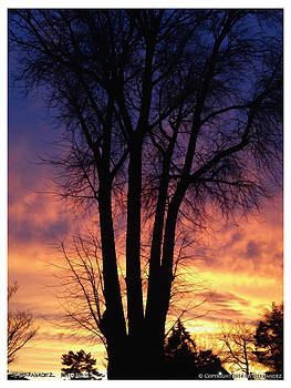 Tree and Sunset 1 by Ed Hernandez