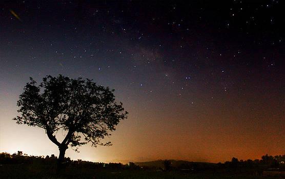 Tree and The Milkyway by Vishal Kumar